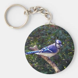 Arrendajo azul hermoso llavero redondo tipo pin