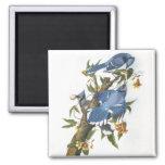 Arrendajo azul, John James Audubon Iman Para Frigorífico