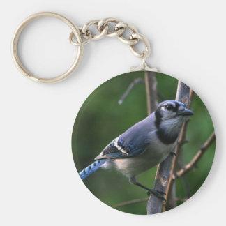 Arrendajo azul llavero redondo tipo pin
