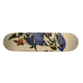 Arrendajo azul tablas de patinar