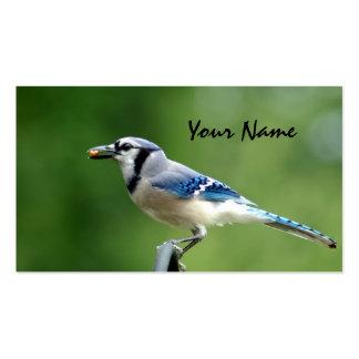Arrendajo azul tarjetas de visita