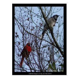 Arrendajo azul y cardenal de los centinelas de Lee Tarjeta Postal
