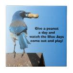 Arrendajo azul y un cacahuete azulejo ceramica