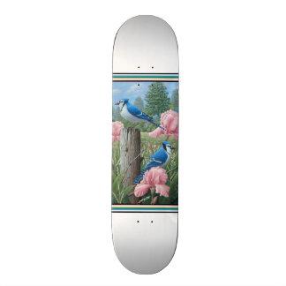 Arrendajos azules patines