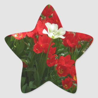 Arroje y retirándose pegatinas forma de estrellaes