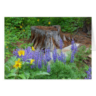 Arrowlead Balsamroot and Silvery Lupine Card
