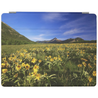 Arrowleaf balsomroot covers the praire with