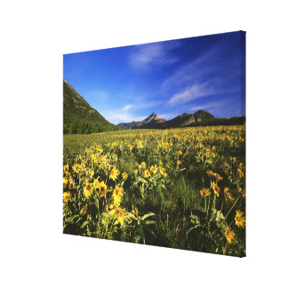 Arrowleaf balsomroot covers the praire with canvas print