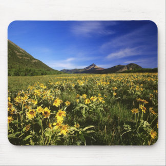 Arrowleaf balsomroot covers the praire with mousepads
