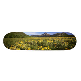 Arrowleaf balsomroot covers the praire with skateboard deck