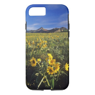 Arrowleaf balsomroot wildflowers in Waterton 2 iPhone 7 Case