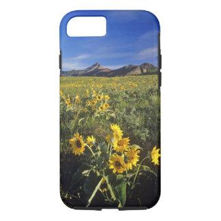 Arrowleaf balsomroot wildflowers in Waterton 2 iPhone 8/7 Case