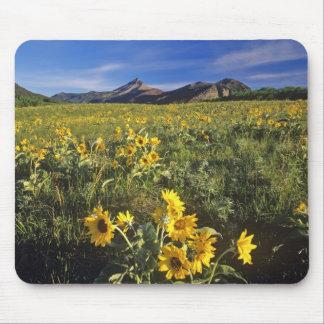 Arrowleaf balsomroot wildflowers in Waterton 2 Mouse Pads