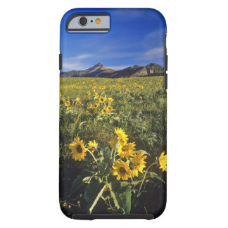 Arrowleaf balsomroot wildflowers in Waterton 2 Tough iPhone 6 Case