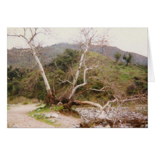 Arroyo Card