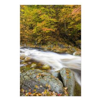 Arroyo del rugido en caída en el verde de Vermont Cojinete