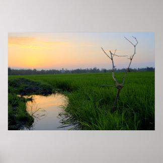Arroz de arroz de Vietnam Póster