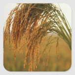 Arroz de grano largo pegatina cuadrada