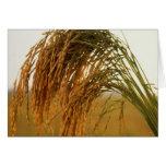 Arroz de grano largo tarjetas