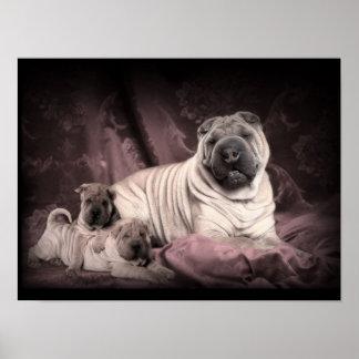 Arrugas de Shar Pei del chino del vintage, perros  Póster