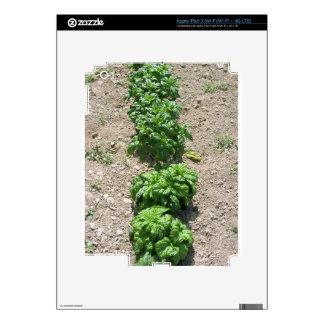 Arsenal de variedades de la albahaca iPad 3 skin