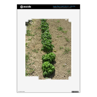 Arsenal de variedades de la albahaca pegatina skin para iPad 3