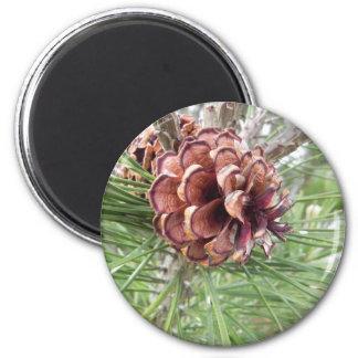 arsenal del cono del pino imán redondo 5 cm