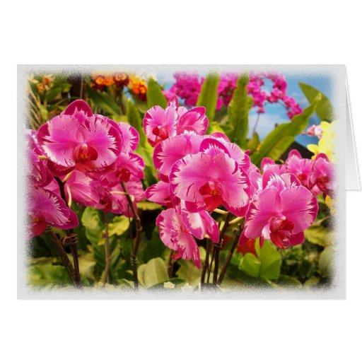 Arsenal hermoso de orquídeas de mariposa púrpuras tarjetas