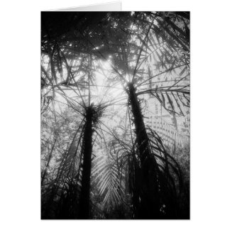 Art Card: Amazon Rainforest Black and White Palms Card