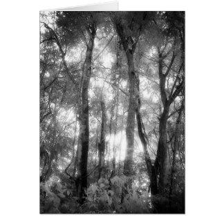 Art Card: Amazon Rainforest Black & White Jungle Card