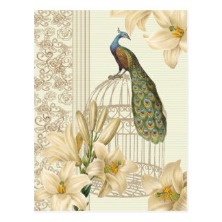 art nouveau  french lily vintage birdcage peacock postcard