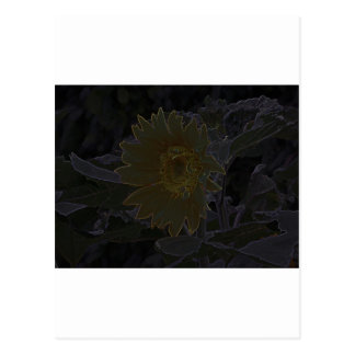 Art of Helianthus Post Cards