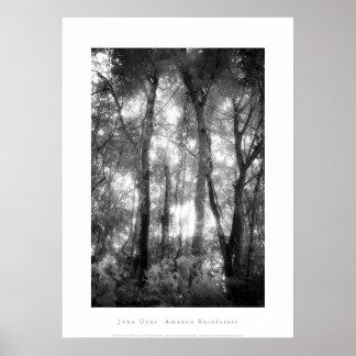 Art Poster: Amazon Rainforest. Black and White Poster