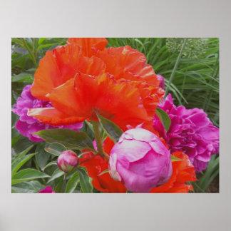 Art Print: Poppies, Peonies, Orange and Pink