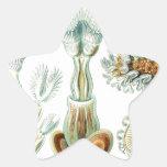 Arte 15 de la naturaleza del vintage colcomanias forma de estrella personalizadas