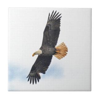 Arte altísimo de la foto de Eagle calvo Wildife Azulejo Cuadrado Pequeño
