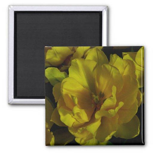 Arte amarillo del tulipán imán de nevera