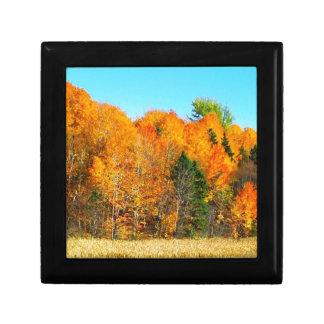 Arte anaranjado de la foto de Terranova Canadá de  Cajas De Regalo