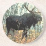 Arte animal de la fauna del parque de los árboles  posavasos cerveza