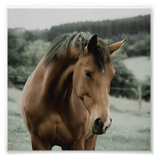 arte animal de la pintura del caballo del vintage fotografías