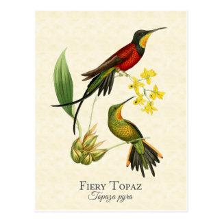 Arte ardiente del vintage de los colibríes del tarjeta postal