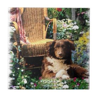 Arte australiano del perro de pastor azulejo cuadrado pequeño