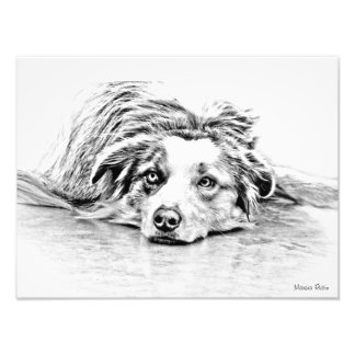 Arte australiano del perro de pastor fotografías