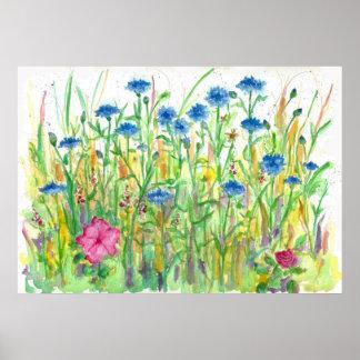 Arte azul de la acuarela del Cornflower del botón  Poster