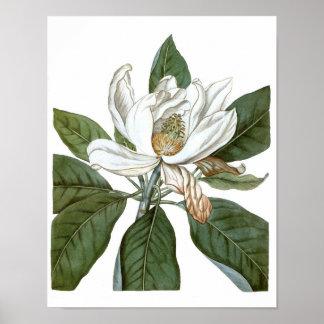 Arte botánico de la pared de la impresión #6 del póster
