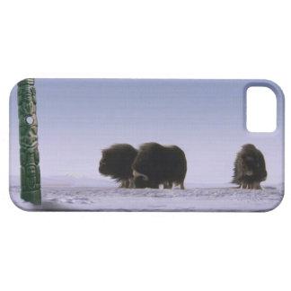 Arte bovino ártico de la fauna de los bueyes y de funda para iPhone SE/5/5s