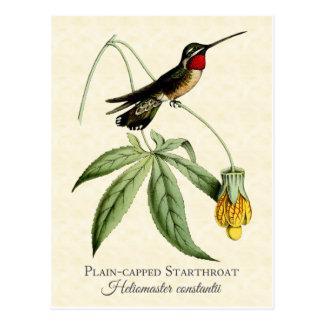 Arte capsulado llano del vintage del colibrí de tarjetas postales