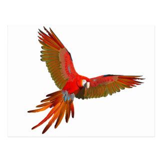 Arte colorido de la mosca del macaw del escarlata tarjeta postal