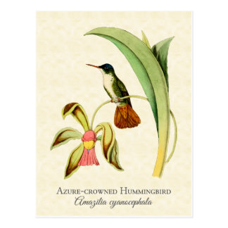 Arte coronado azul del vintage del colibrí tarjeta postal