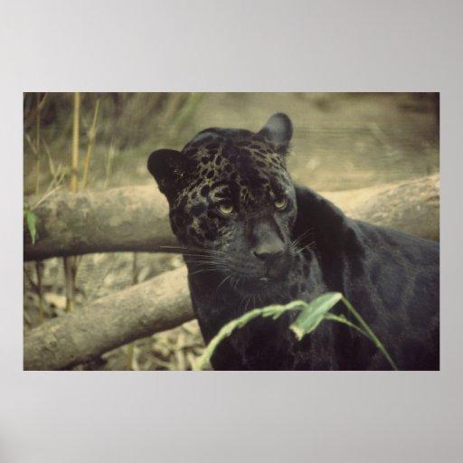 Arte de Black_jaguar Póster